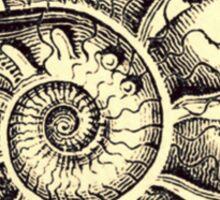 Ammonite Sticker