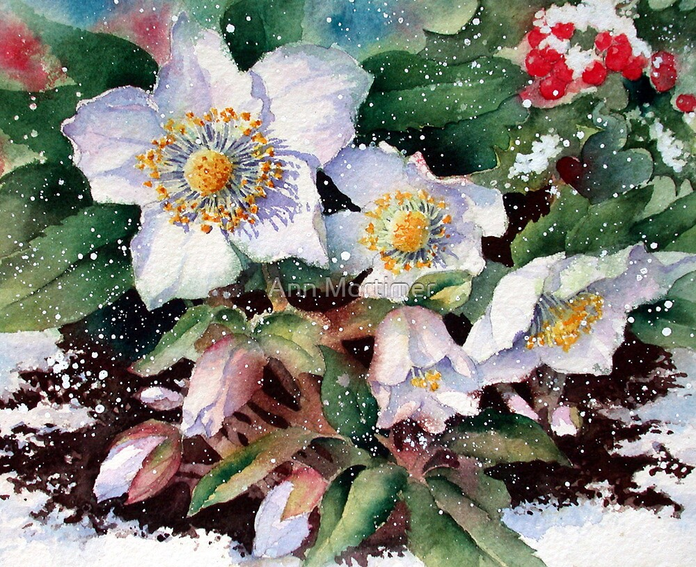 Snowy Hellebores by Ann Mortimer