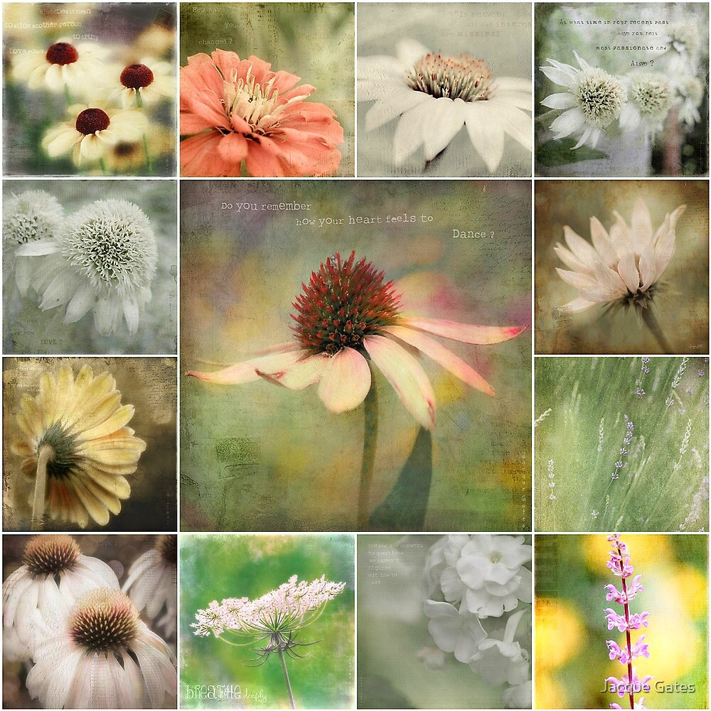 petals of hope and inspiration by Jacque Gates