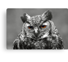 bright eyed wise one ! Canvas Print