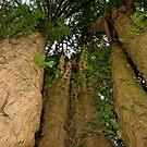 hug a tree ! by markbailey74