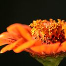 Flower in Motion by Cathy O. Lewis