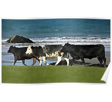 The cows had a great day on the beach. Poster