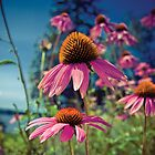 Summer Fling Cone Flowers by Erin Reynolds