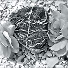 Heart Of Stone - Amongst the Roses - Found on the Beach by Jack McCabe