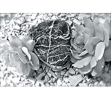 Heart Of Stone - Amongst the Roses - Found on the Beach Photographic Print