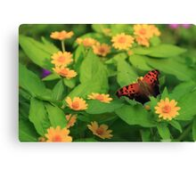 Question Mark in the Garden Canvas Print