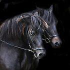 Ponies in the dark by Alan Mattison
