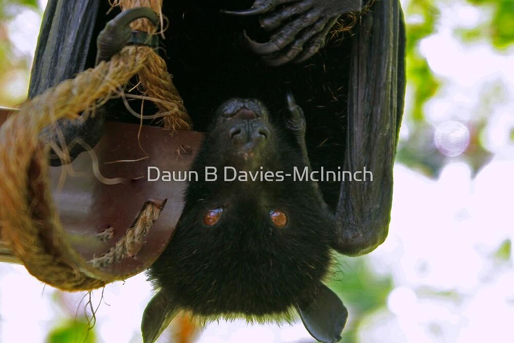Funny Face by Dawn B Davies-McIninch