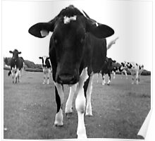 Cow 2 Poster