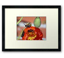 Grass Hoppers Framed Print