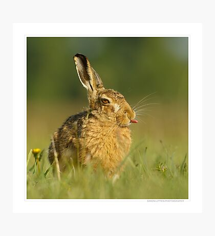 Square Hare 01 Photographic Print