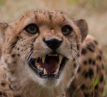 Murphy the Cheetah by JMChown
