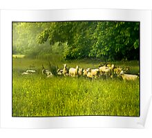 English Countryside Poster