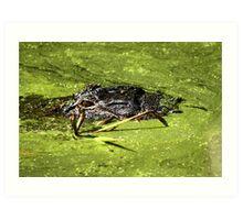 Gator in Swamp Art Print