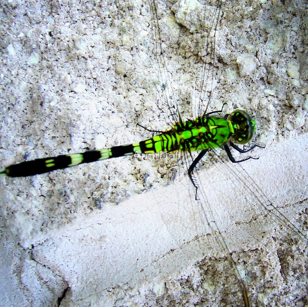Green Dragonfly by AuntDot