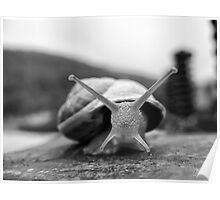 X Snail Poster
