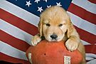 All-American Dog by Maria Dryfhout