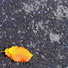 A fallen one by iamelmana