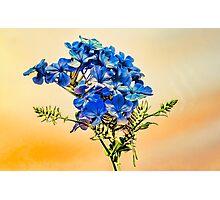 Summer blue flowers Photographic Print