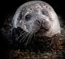 tide line pup by outwest photography.co.uk