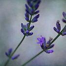 Summerday  Fragrance by Priska Wettstein