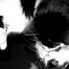Cat's Narcissism 1 by Kristin Sparks