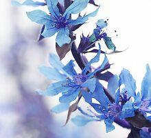 Carefree -blue by MistyIslet