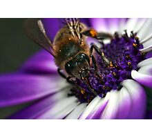 Bee in the Midst.  Photographic Print