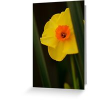 A Sunny Yellow Greeting Card