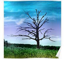Dead Tree in Meadow Colorized Poster