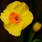 Spring is Here by Joe Mortelliti