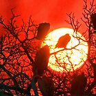 Vultures silhouetted into sunset by jozi1