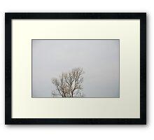 Сrown Framed Print