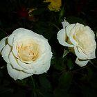 White Roses by WildestArt