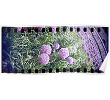 Purple flower analog photo with sprocket holes Poster