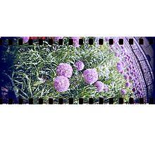 Purple flower analog photo with sprocket holes Photographic Print