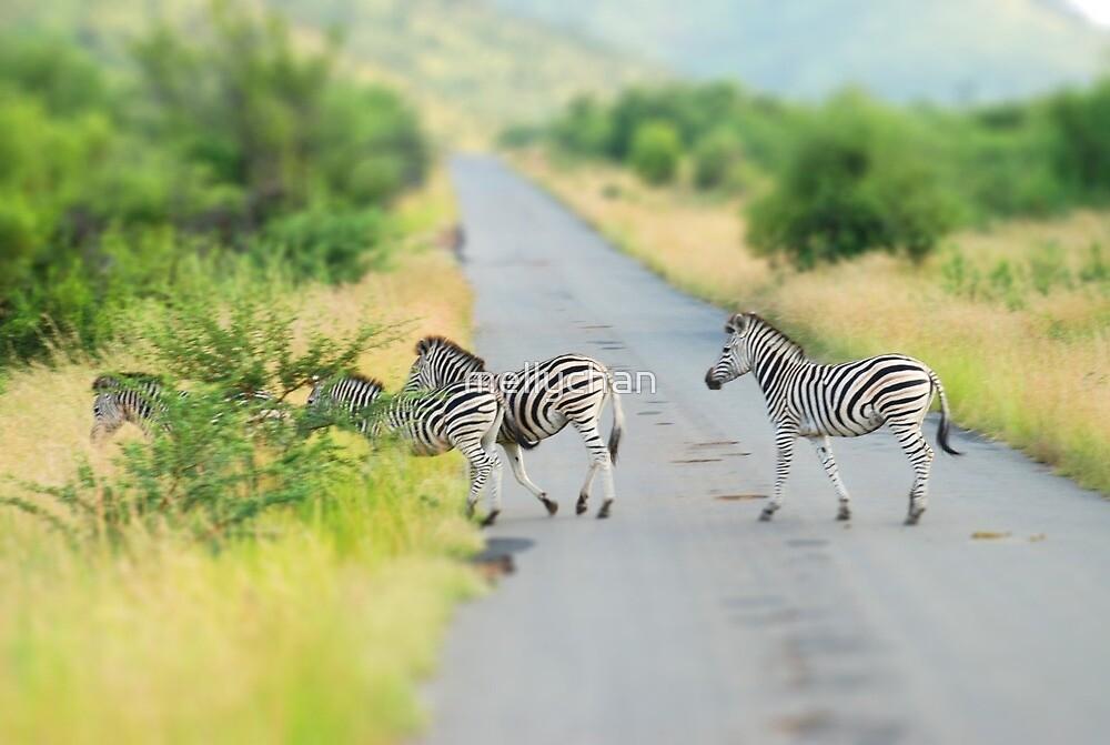 zebra crossing by mellychan