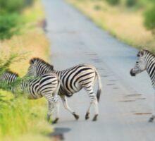 zebra crossing Sticker