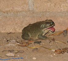 """Blahh, Sour bugs"" Toad by Sherry Pundt"