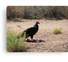 """Dinner is served"" Turkey Vulture Canvas Print"