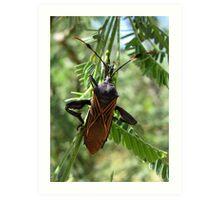 Giant Mesquite Bug Art Print