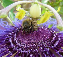 Bee~autiful Passion Flower by Kimberly Chadwick