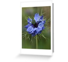 Going Soft Greeting Card