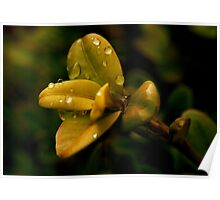 Dew Drop Tapestry Poster