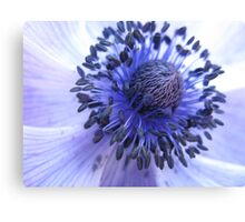 Purple Poppy Canvas Print