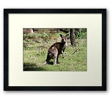 Who's Watching Who ? Framed Print