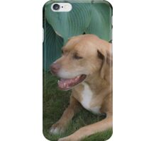 Dog Relaxes iPhone Case/Skin