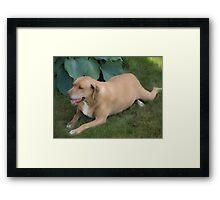Dog Relaxes Framed Print
