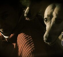 Driving with the dogs by KarynL